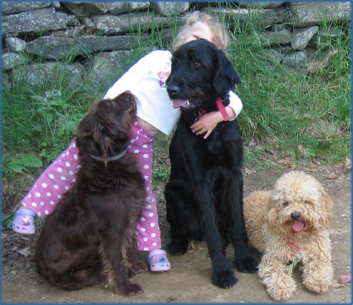 Labradoodle Maine - Contact Us
